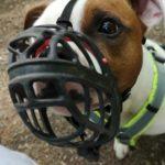 Das Verhalten meines Hundes liegt an mir – Teil 3, Ende